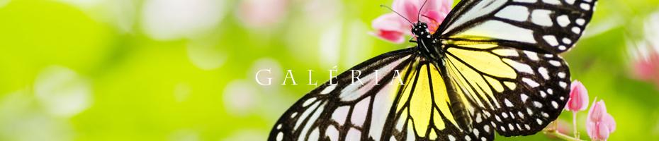 galeria_fruktarium